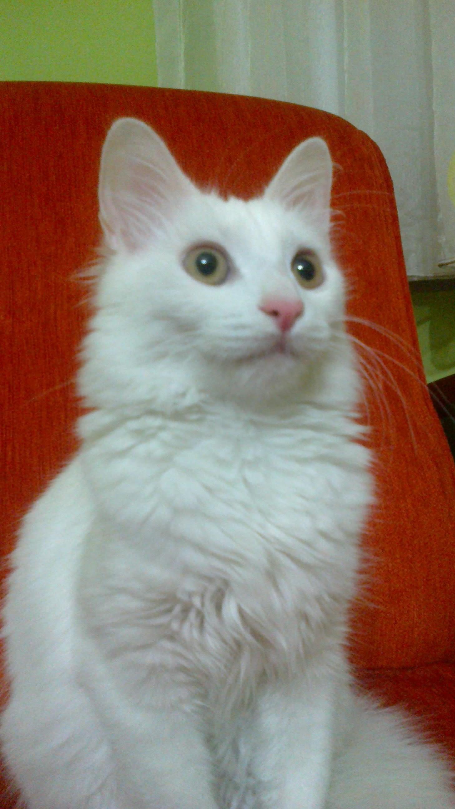 Kediler Hakkında Yanlış Bildiklerimiz