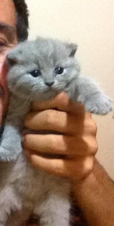 İşte,dünyanın en pahalı 5 kedi cinsi