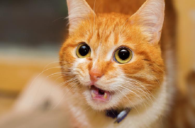 strange cat behaviour medical